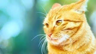 Котам иногда бывает стыдно (2015)   Cats feel confused compilation