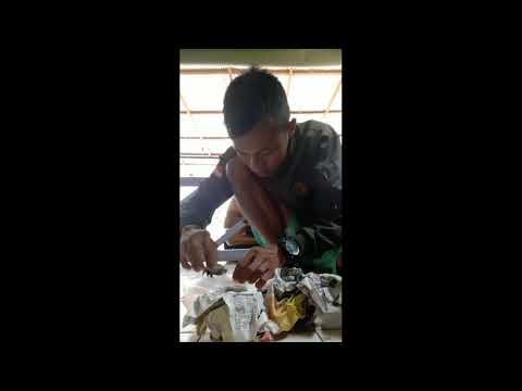 UNBOXING KURA COMMON SNAPPING TURTLE DARI LANGGANAN | CST CERAH  #REPTILVLOG