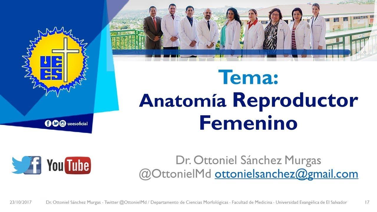 Anatomia Aparato Reproductor Femenino - Doctorado en Medicina - YouTube