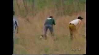 2002 Akc Spo National Beagle Field Trial 15 Females