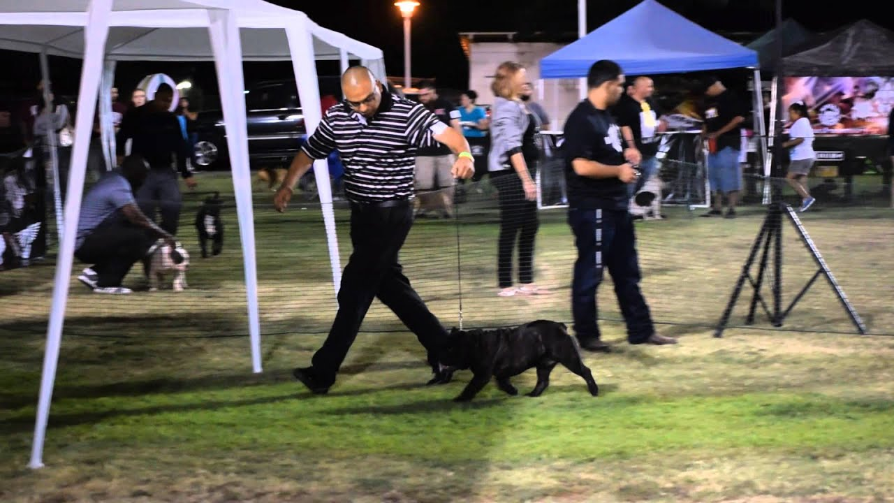 e25d60b327 Vizo Kennels with Shorty Bull Show 2 - YouTube