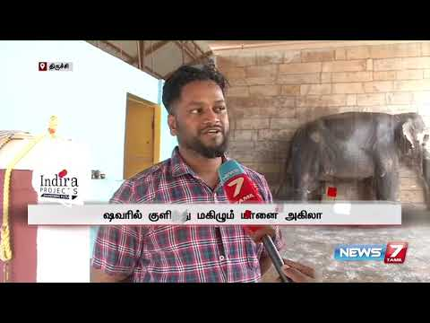 பிரமாண்ட ஷவரில் குளித்து மகிழும் திருச்சி திருவானைக்காவல் கோயில் யானை   Subscribe : https://bitly.com/SubscribeNews7Tamil  Facebook: http://fb.com/News7Tamil Twitter: http://twitter.com/News7Tamil Website: http://www.ns7.tv    News 7 Tamil Television, part of Alliance Broadcasting Private Limited, is rapidly growing into a most watched and most respected news channel both in India as well as among the Tamil global diaspora. The channel's strength has been its in-depth coverage coupled with the quality of international television production.