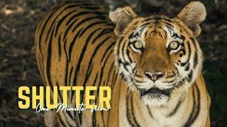 Shutter | Filmstro & Film Riot One Minute Short Film Competition | Adarsh Gupta