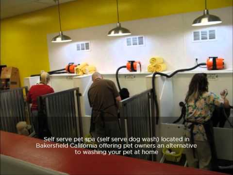 Self serve pet spa youtube self serve pet spa solutioingenieria Images