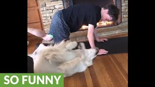 "Dog decides to ""workout"" with his owner"
