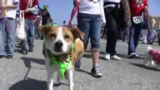 February 14  The Pet Parade and Childrens Parade  Galveston