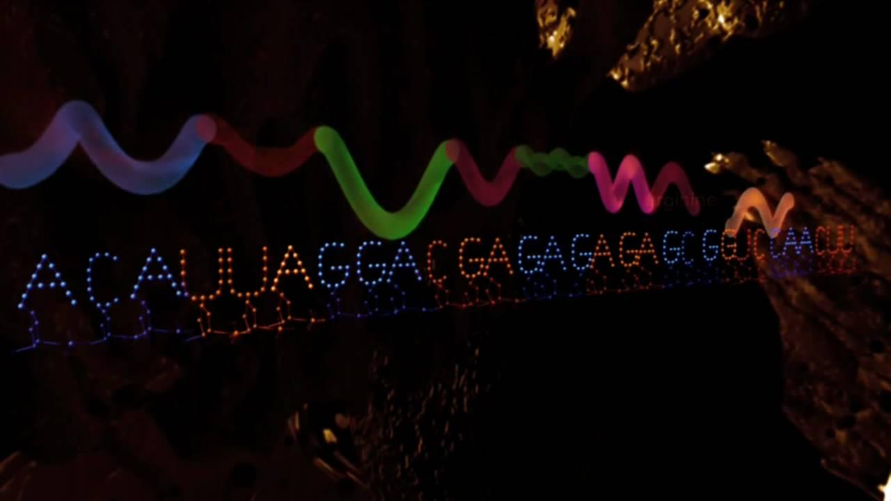 Molecules of Life   Basic Biology