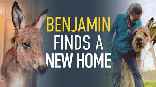 Horse Adopter Heroes: Benjamin Finds A New Home