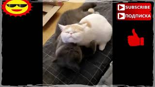Funniest Animals 🐼 - Try Not To Laugh - cats and dogs - VERY FUNNY ANIMALS