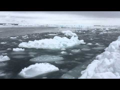At the edge of the sea-ice in Alaska