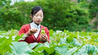 From planting seedlings to table food in 45 days|Chinese Food野小妹 wild girl
