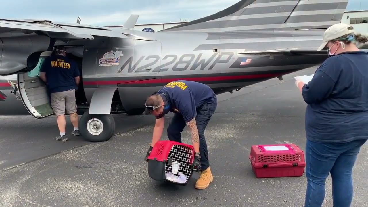Wings of Rescue to the rescue!