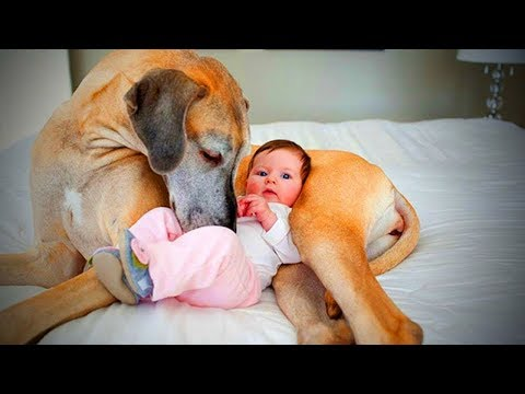 cute dogs love babies cute dogs babysitting babies full epic life