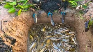 Amazing Deep hole Trap Catch a lot of fish and eels Make By Smart Boy in cambodia