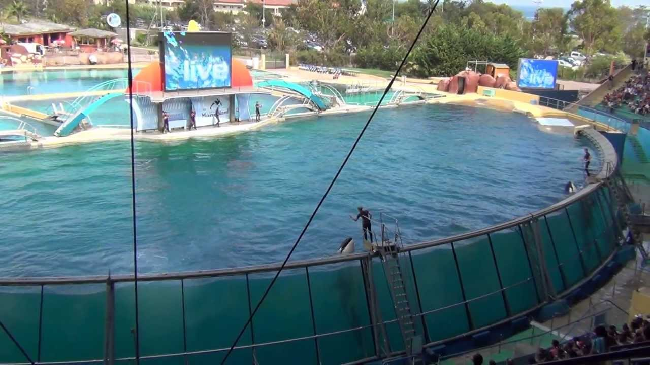 Killer whale show, Marineland, Antibes, France - YouTube