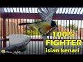 Gak Bisa Diam Kalau Burung Kowul Lain Dengar Suara Kolibri Wulung Yang Satu Ini  Mp3 - Mp4 Download
