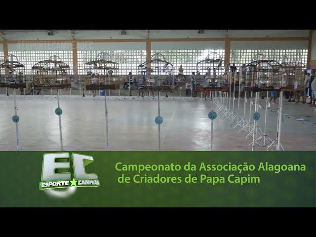 Campeonato da Associação Alagoana de Criadores de Papa Capim 2019