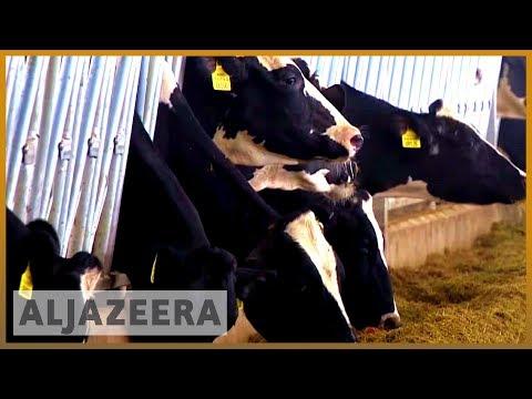 🇶🇦 Gulf crisis one year: Qatar steps up self-sustainability | Al Jazeera English