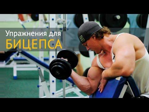 Упражнение для мышц бицепса