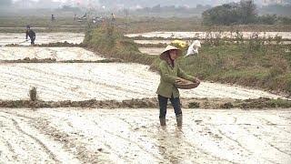 Quảng Bình khẩn trương gieo trồng vụ đông xuân 2018