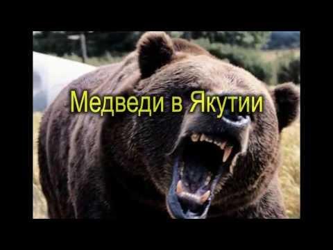 Медведи гей порно онлайн shannonuksite