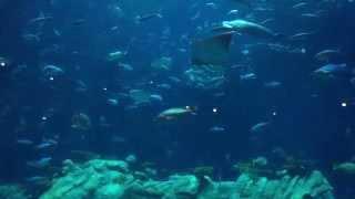 The Super Aquarium in the Hong Kong Ocean Park / Theme Park (海洋公園的海洋館 / 超級水族館)