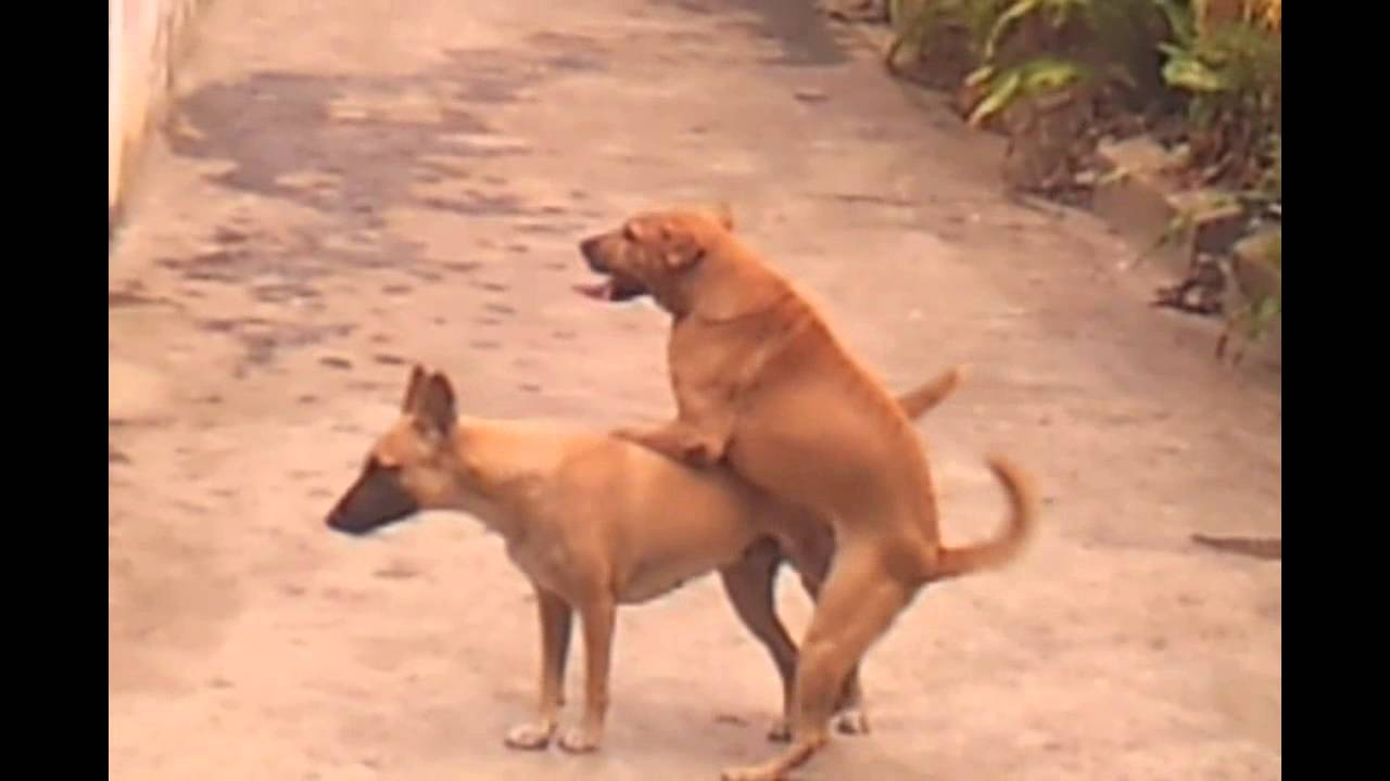 amateur dog trying his best to get laid. lol - youtube