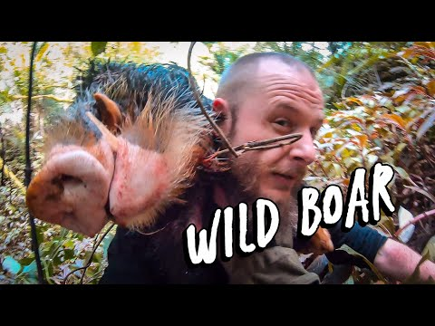 Kaimai Wild Boar Hunt With Dogs In New Zealand (HUNTING VLOG 2)