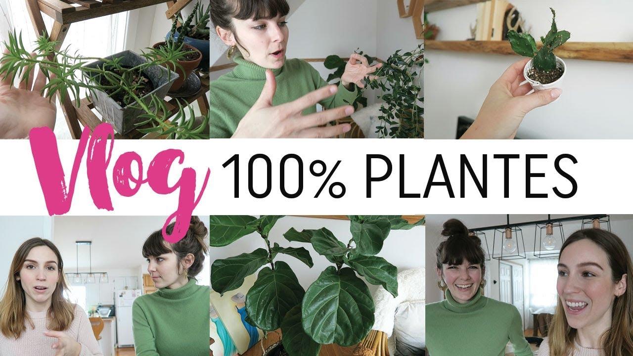 Etagere Pour Plantes Interieures plantes d'intÉrieur 101