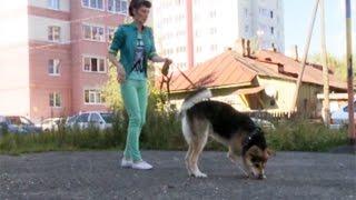 Мошенник продавал вологжанам щенков дворовых собак под видом породистых