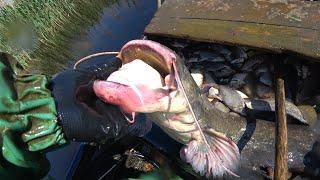 Ловля сома Промысловый лов Подошла рыба