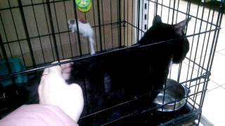 Котик отказник с обрезанными усами и бровями