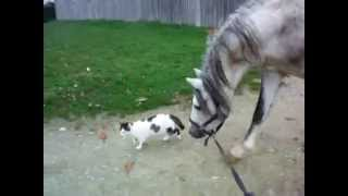 chatte et cheval ^^