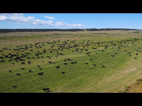 Montana Ranch For Sale / Teigen Ranch - East  / Lewistown, Mt