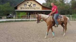 Western jahanje - Vaje za mehčanje konja, Sandi Gombač  www.gombac-horses.com SIQH