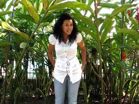 dating honduran woman