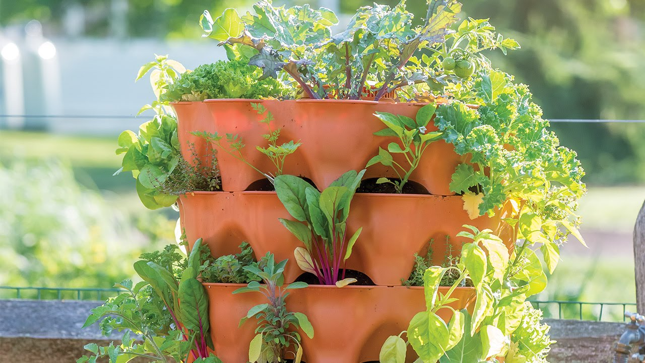 Companion Planting Guide Growing Tips And Advice Articles Burpee
