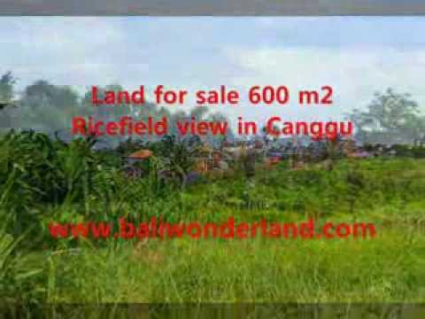 Land for sale in Bali, stunning paddy view in Canggu Bali -- TJCG130