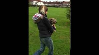 Border Terrier George Gets A Lift
