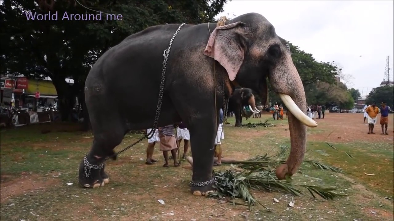 Elephants Of Kerala - YouTube