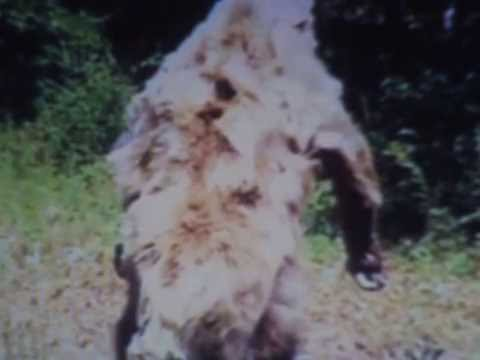 ATOKA COUNTY BIGFOOT SEEN AND PHOTOGRAPH