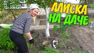 ВЛОГ Алиска на даче Работаем Как сделать укол коту Купил бочки на дачу Снова шашлык