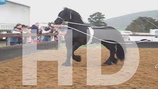 سبحان الله العاديات Amazing horse - English CC