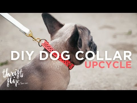 DIY DOG COLLAR AND LEASH | THE SORRY GIRLS