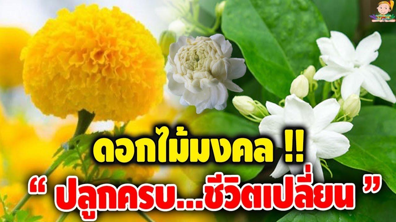 ดอกไม้มงคล 3 ชนิด ปลูกดูดทรัพย์ เสริมดวง เพิ่มบุญบารมี!!