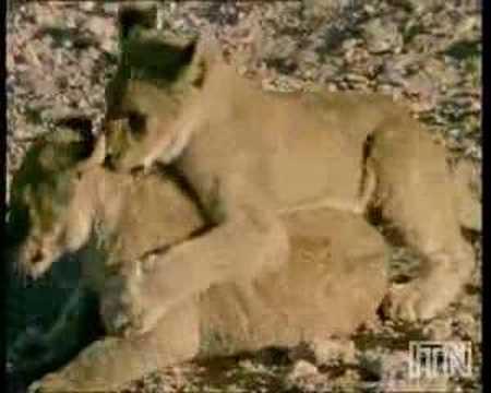 знакомства walaa лев