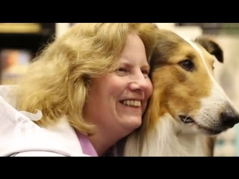 Plotting Lassie's Future | The New York Times