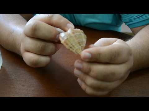 Как обработать ракушки с моря