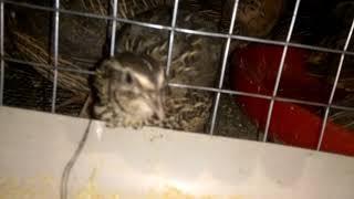 Poultry Breeding Books Pdf