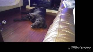 How to stop a dog snoring!!!